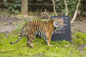 Taking stock…ZSL London Zoo's annual stocktake